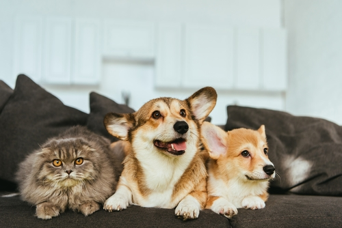 Cats or dogs, which is superior?